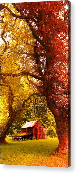 Forest Acrylic Print featuring the photograph Cosy Shed by Svetlana Sewell