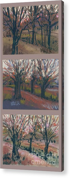 Pastel Acrylic Print featuring the drawing Orchard Sunset by Donald Maier
