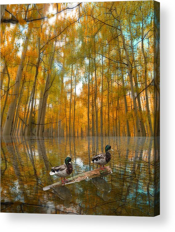 Ducks Acrylic Print featuring the photograph 2549 by Peter Holme III