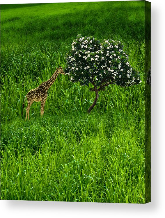 Animal Acrylic Print featuring the photograph 3545 by Peter Holme III