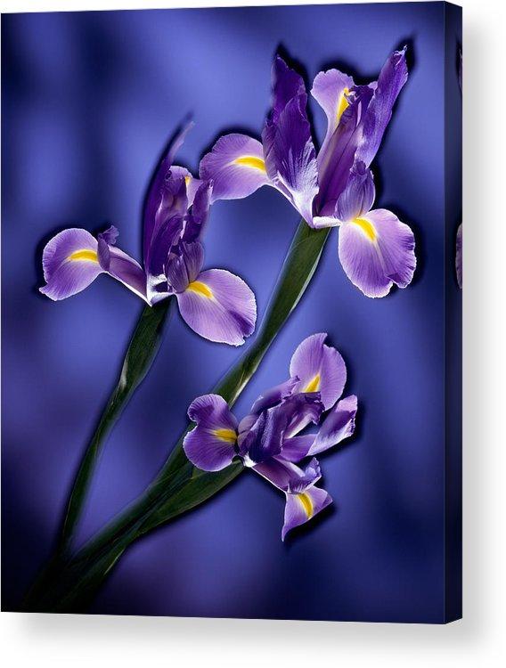 Iris Acrylic Print featuring the photograph Three Iris Xiphium by Kirk Ellison