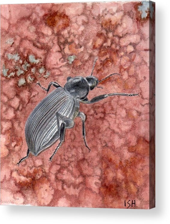 Insect Acrylic Print featuring the painting Darkling Beetle by Inger Hutton