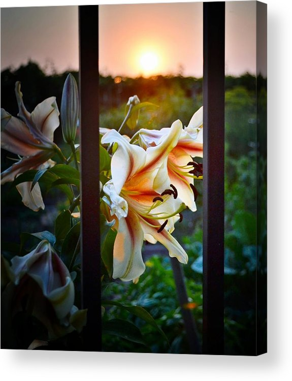 Flower Acrylic Print featuring the photograph Flower 5 by Bener Kavukcuoglu