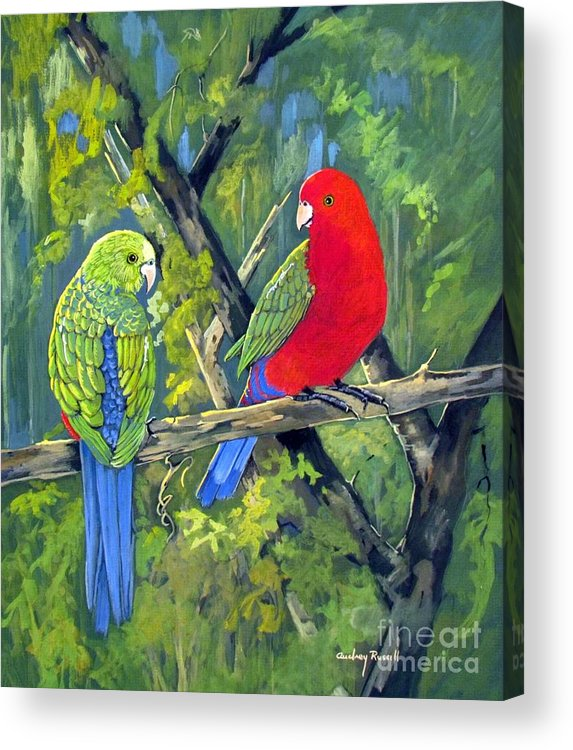 Parrots. Birds Acrylic Print featuring the painting king parrots Australia by Audrey Russill