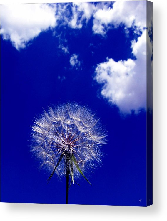 Flower Acrylic Print featuring the photograph Puffs by Peri Craig
