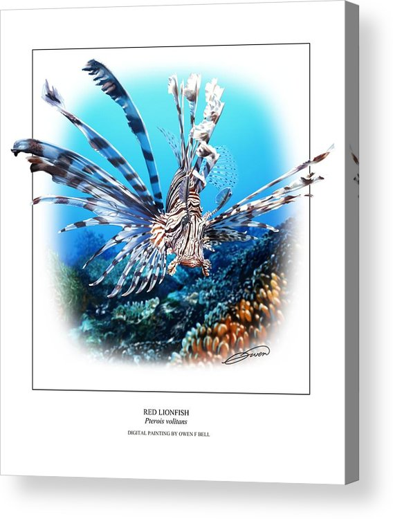 Red Lionfish Acrylic Print featuring the digital art Red Lionfish by Owen Bell