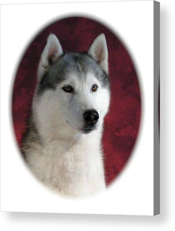 Siberian Husky Digital Art Acrylic Print featuring the digital art Siberian Husky 899 by Larry Matthews