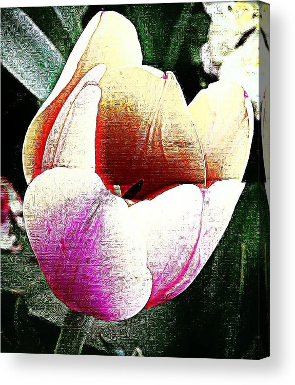 Tulip Acrylic Print featuring the photograph The Tulip by Vickie Beasley