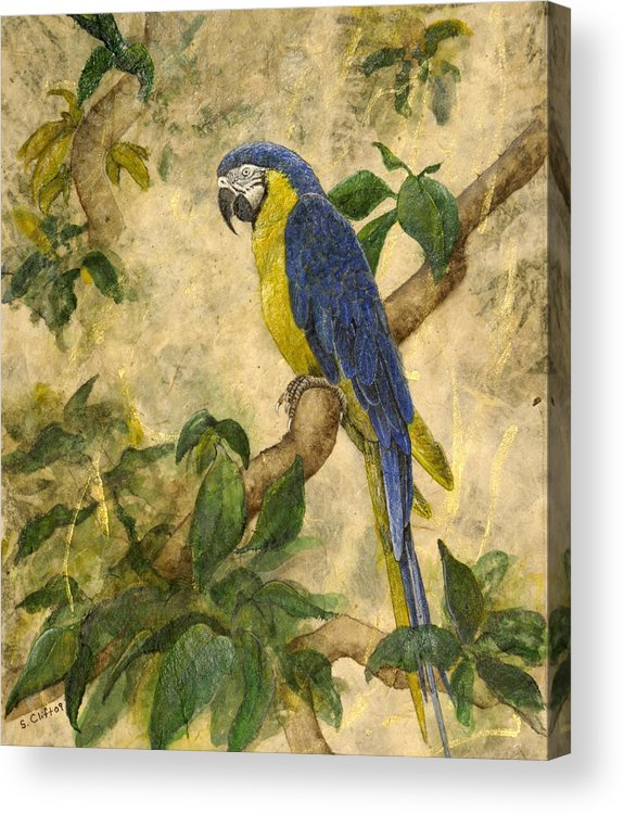 Parrot Acrylic Print featuring the painting Beneath The Canopy by Sandy Clift