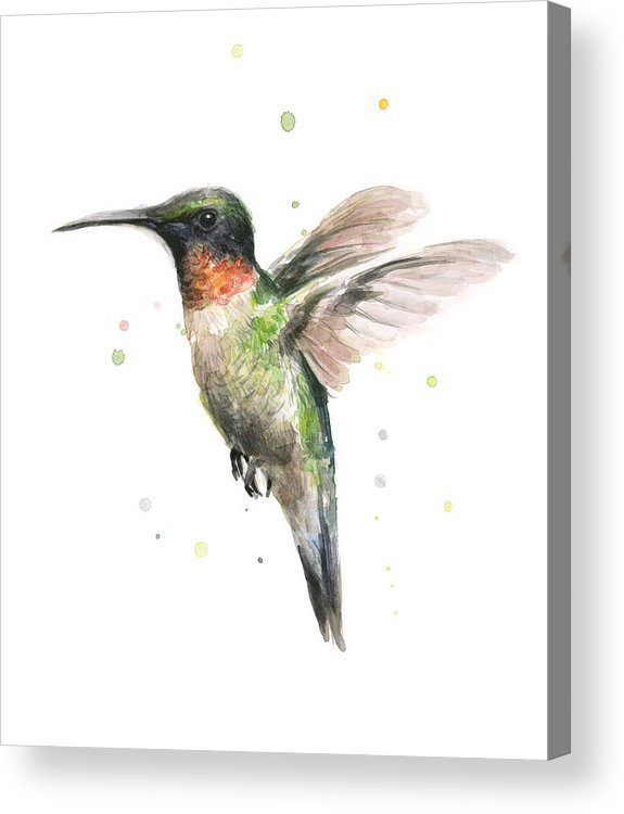 Animal Acrylic Print featuring the painting Hummingbird by Olga Shvartsur
