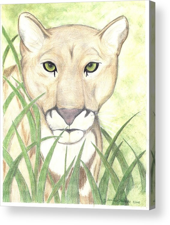 Mountain Lion Acrylic Print featuring the drawing Stalker by Jennifer Skalecke