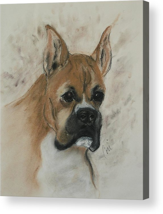 Dog Acrylic Print featuring the drawing Steady Goes It by Cori Solomon