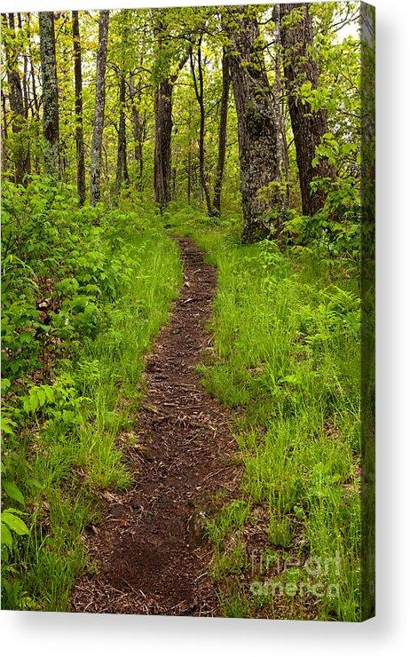 Blue Ridge Parkway Acrylic Print featuring the photograph Hiking Through The Blue Ridge I by Dan Carmichael