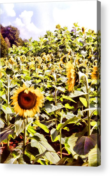 Floral Acrylic Print featuring the photograph Just Look At Me by Jan Amiss Photography