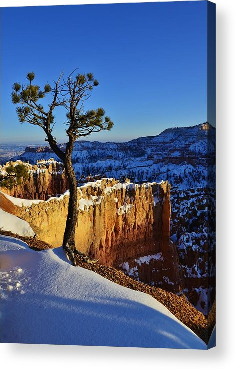Bryce Canyon Acrylic Print featuring the photograph Lone Tree At Bryce Canyon by David Knowles
