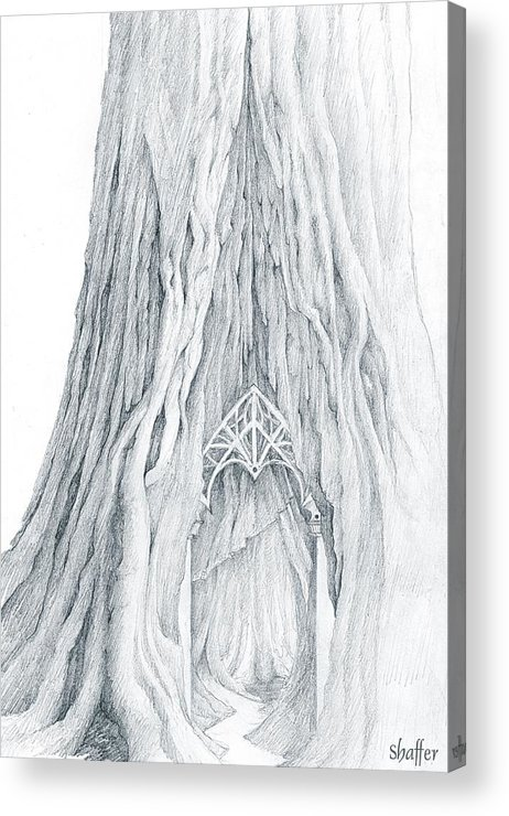 Lothlorien Acrylic Print featuring the drawing Lothlorien Mallorn Tree by Curtiss Shaffer