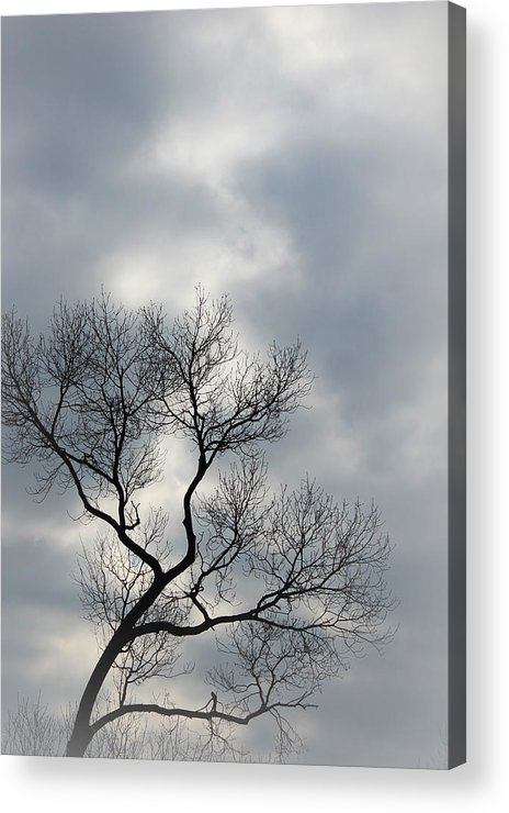 Trees Acrylic Print featuring the photograph The Lonely Tree by The Art Of Marilyn Ridoutt-Greene