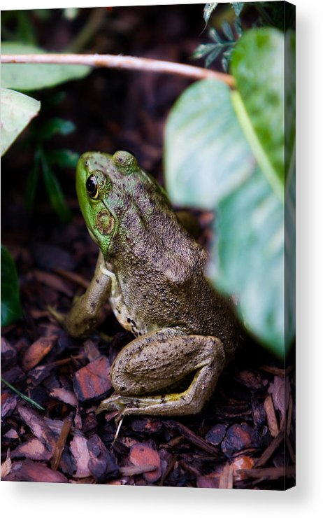 Toad Acrylic Print featuring the photograph Toad by Brent Phillips