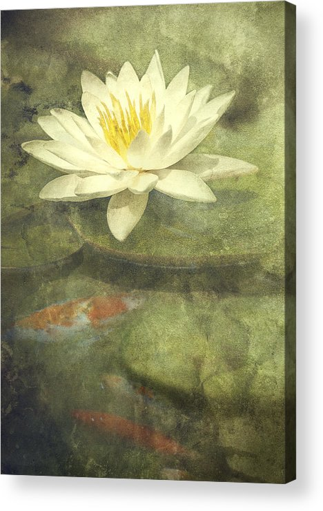 Water Lily Acrylic Print featuring the photograph Water Lily by Scott Norris