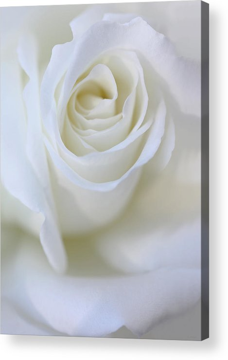 Rose Acrylic Print featuring the photograph White Rose Floral Whispers by Jennie Marie Schell
