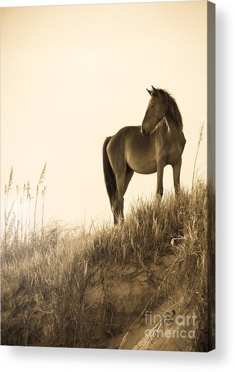 Horse Acrylic Print featuring the photograph Wild Horse On The Beach by Diane Diederich