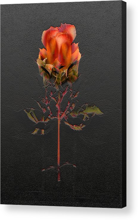Flora Acrylic Print featuring the photograph 2415 by Peter Holme III