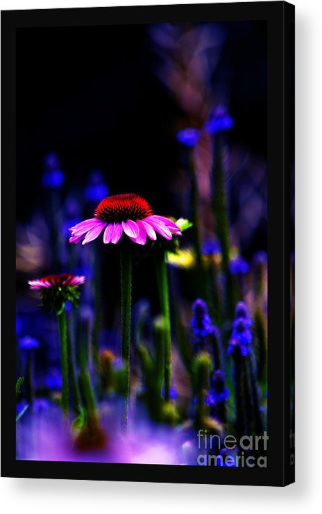 Echincea Acrylic Print featuring the photograph Divine Spirit Of Mother Earth by Susanne Still