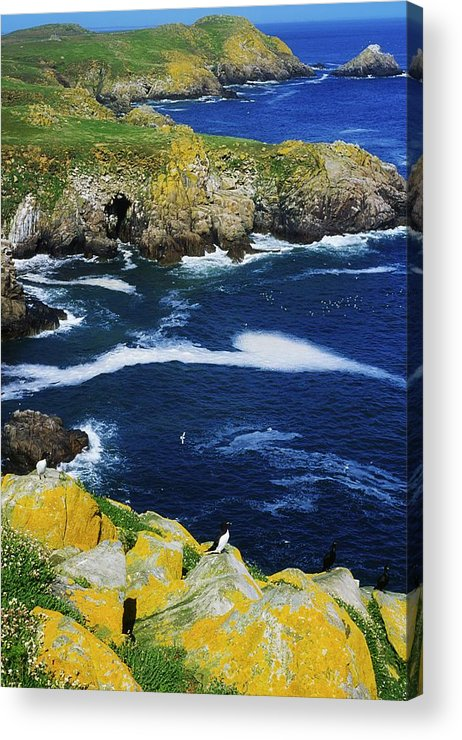 Bird Acrylic Print featuring the photograph Saltee Islands, Co Wexford, Ireland by The Irish Image Collection