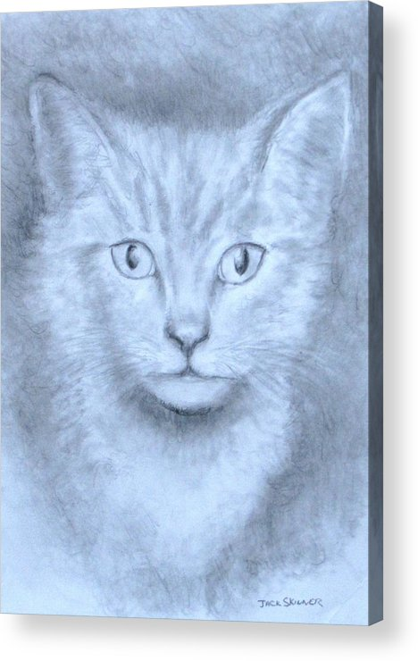 Pencil Drawing Acrylic Print featuring the drawing The Kitten by Jack Skinner