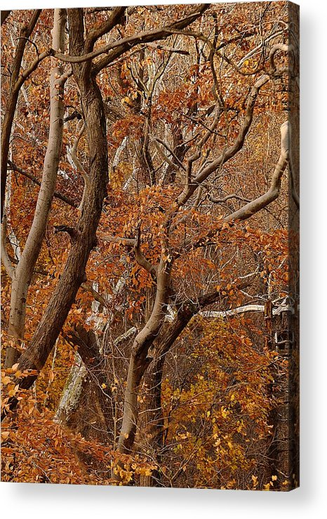 Trees Acrylic Print featuring the photograph Trees Garrison by Bedford Shore Photography