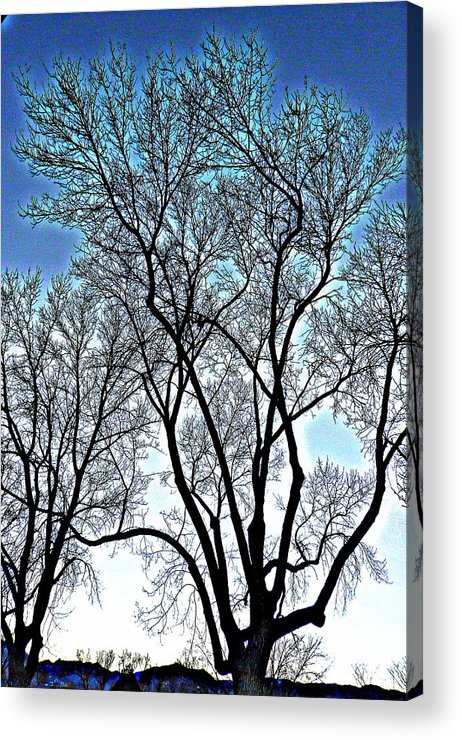 Trees Acrylic Print featuring the photograph Treescapade by Dan Stone