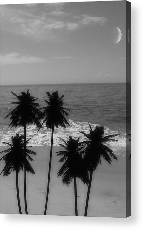 Digital Art Acrylic Print featuring the photograph Tropical Dreaming by Carol A Commins