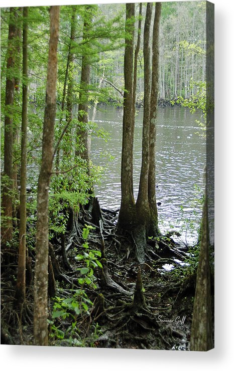 Waccamaw River Acrylic Print featuring the photograph Waccamaw View II by Suzanne Gaff