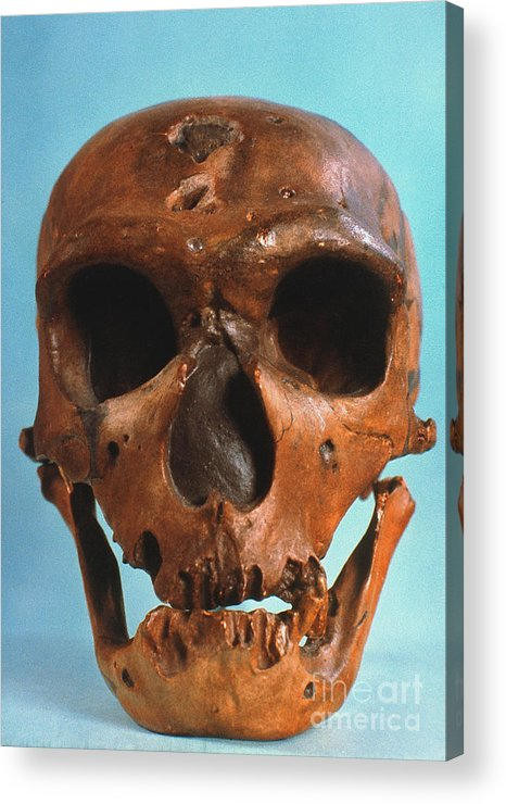 Ancient Acrylic Print featuring the photograph Neanderthal Skull by Granger