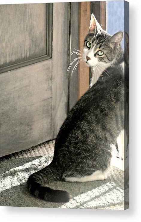 Animal Acrylic Print featuring the photograph The Back Door by Diana Angstadt