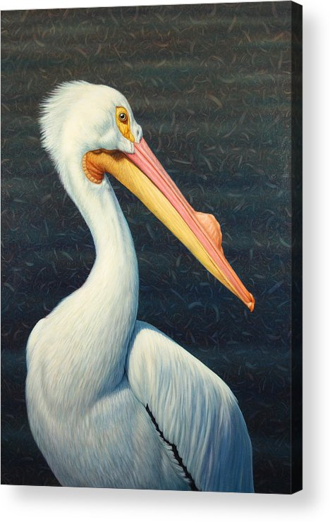 Pelican Acrylic Print featuring the painting A Great White American Pelican by James W Johnson