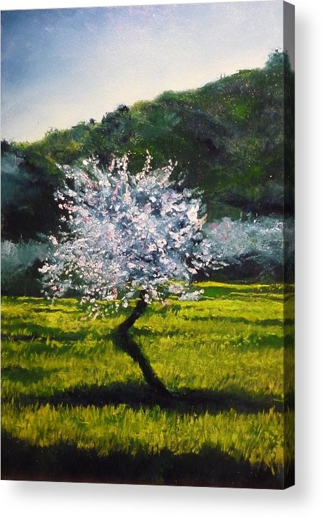 Almond Tree Acrylic Print featuring the painting Almond Tree In Blossom by Lizzy Forrester