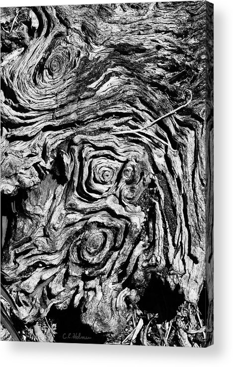 Tree Acrylic Print featuring the photograph Ancient Stump by Christopher Holmes