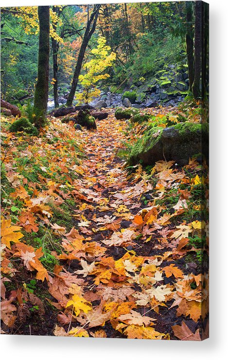 Path Acrylic Print featuring the photograph Autumn Path by Mike Dawson