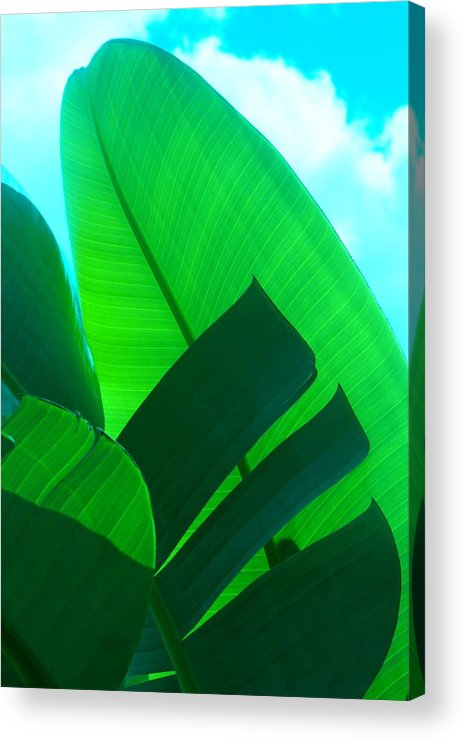 Botanical Acrylic Print featuring the photograph Banana Aqua by Florene Welebny
