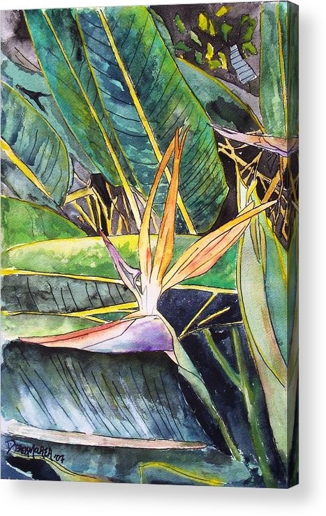 Watercolor Acrylic Print featuring the painting Bird Of Paradise by Derek Mccrea
