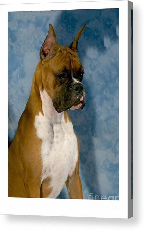 Boxer Digital Art Acrylic Print featuring the digital art Boxer 151 by Larry Matthews