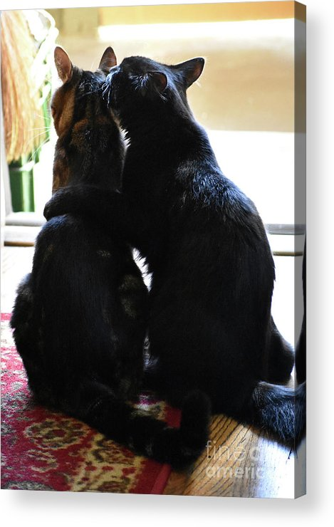 Cat Acrylic Print featuring the photograph Brotherly Cat Love by Rose De Dan
