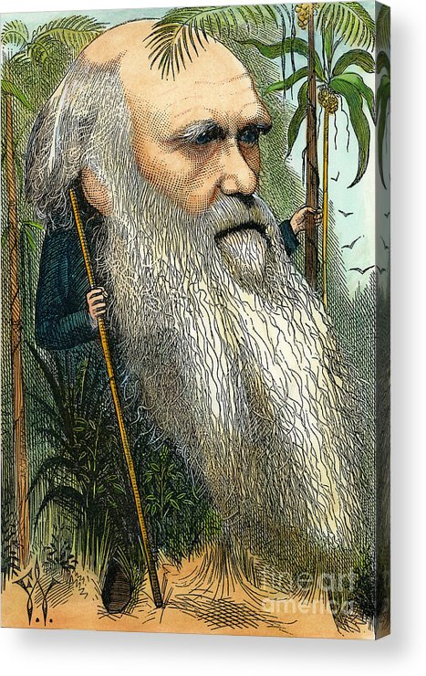 1872 Acrylic Print featuring the photograph Charles Robert Darwin by Granger