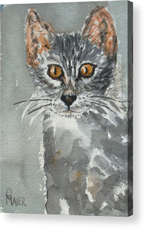 Kitten Acrylic Print featuring the painting Charlotte by Pete Maier