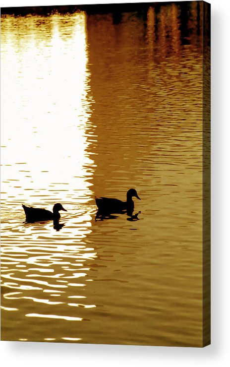 Silhouettes Acrylic Print featuring the photograph Ducks On Pond 2 by Steve Ohlsen