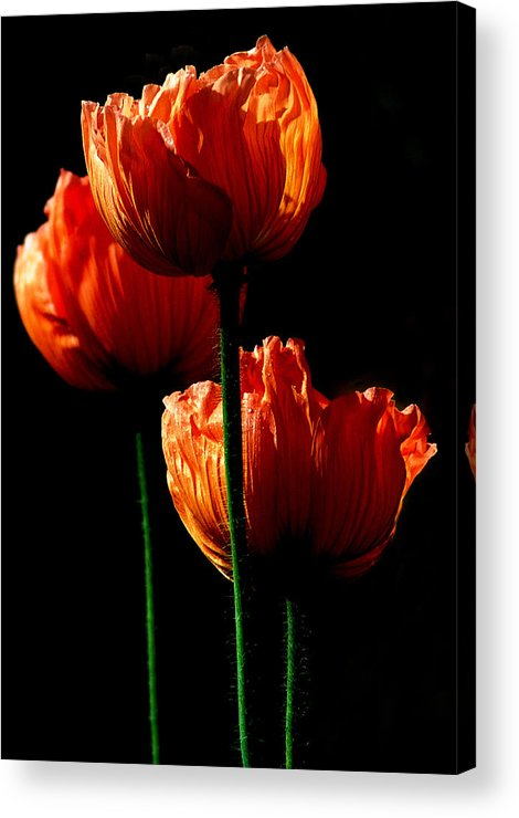 Photograph Acrylic Print featuring the photograph Elegance by Stephie Butler