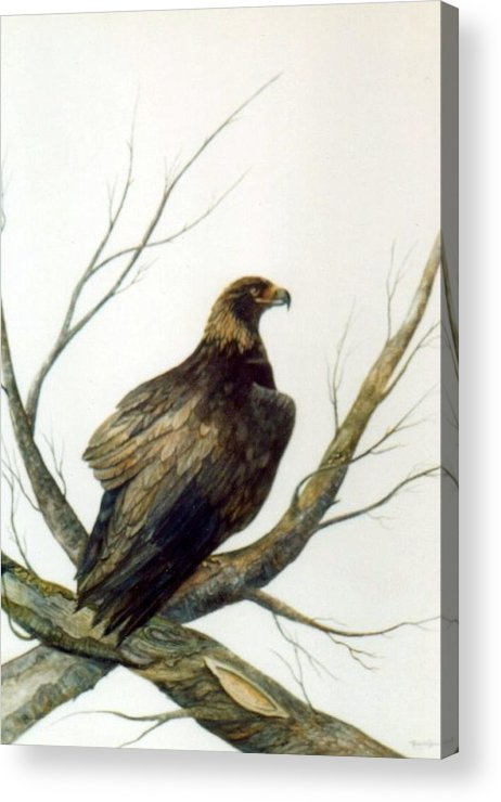 Eagle Acrylic Print featuring the painting Golden Eagle by Ben Kiger