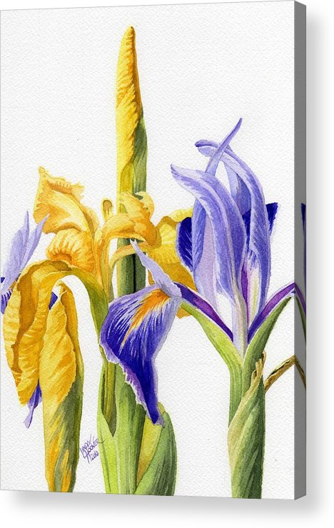 Yellow Acrylic Print featuring the painting Iris And Flag by Linda Hoover