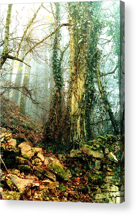 Ivy Acrylic Print featuring the photograph Ivy In The Woods by Nancy Mueller